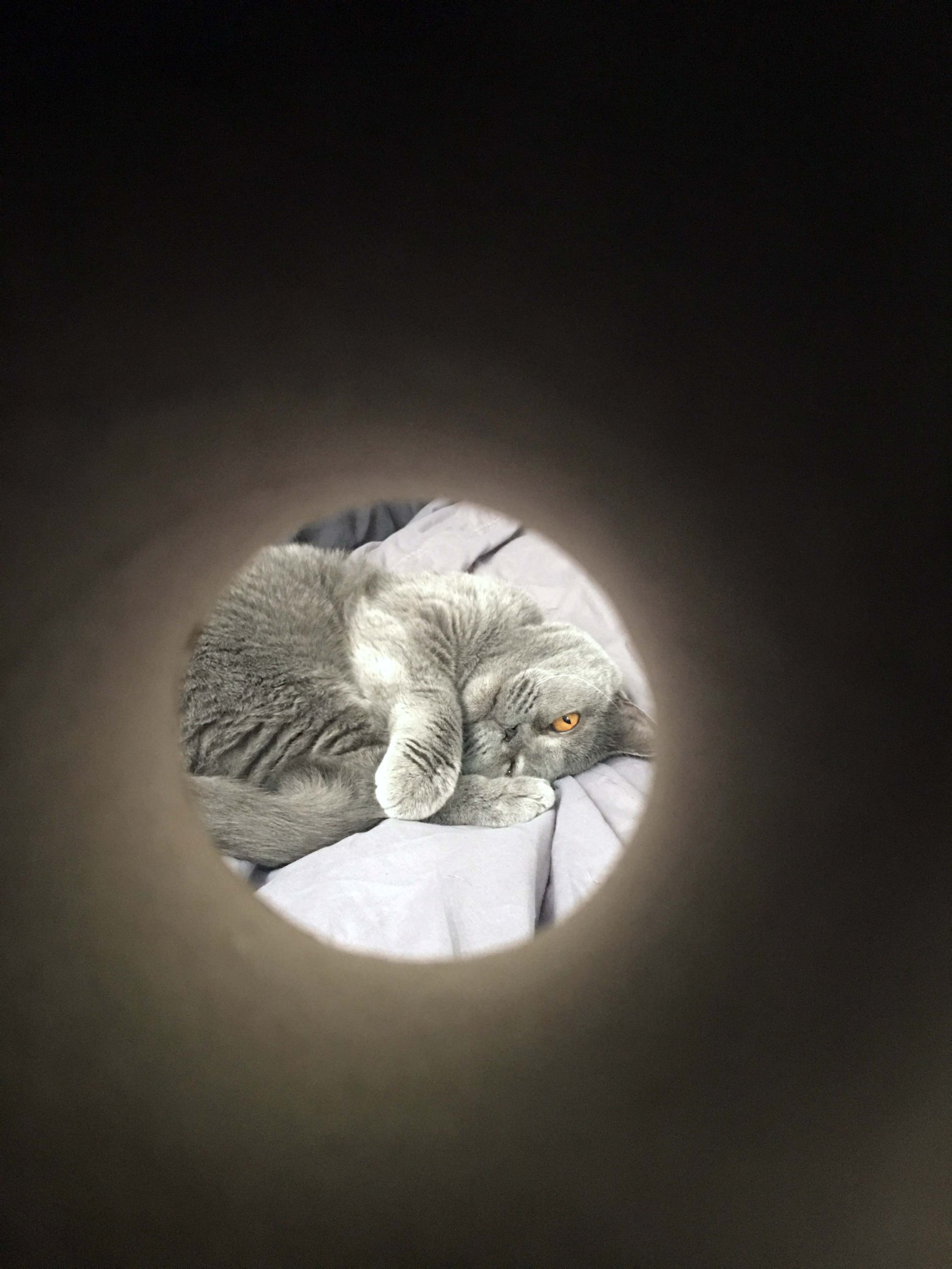 Photograph of BlueBlue the cat taken through a toilet roll tube